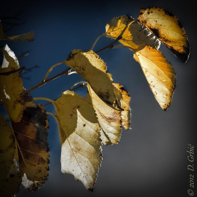 Jedna na dan, 9. novembar 2012: Poslednje lišće