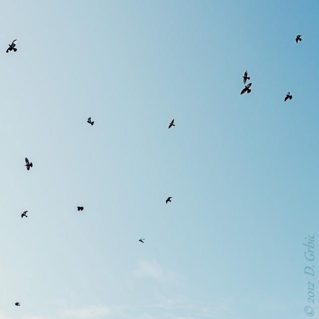 Jedna na dan, 11. decembar 2012: Prisećanje na tek-tek malo topliji dan