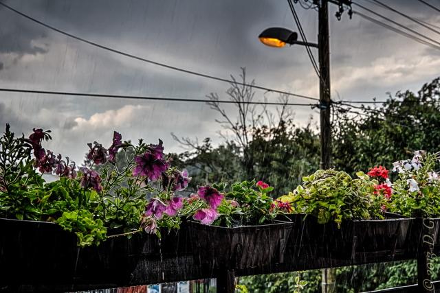 Jedna na dan, 6. jul 2013: A onda je tresnula kiša...