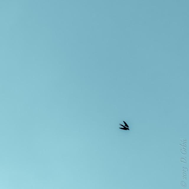 Jedna na dan, 8. jul 2013: Lasta u brišućem letu