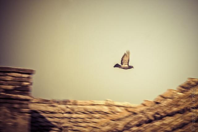Jedna na dan, 29. jul 2013: Let kroz sprženi vazduh