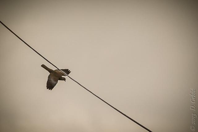 Jedna na dan (3-94), 2. oktobar 2013: U letu