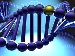 Kuglice su geni, spirala je DNK