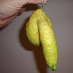 Može i drugačije: kad ožednimo, sisaćemo limun.