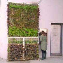 Zelenilo - da odmarate oči dok vadite pare sa zida plača.