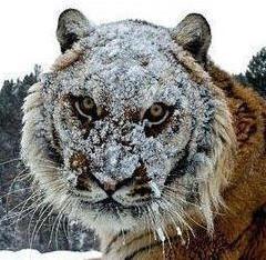 Dok su drugi zabijali glavu u pesak, mi smo se umivali u snegu.