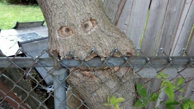 Posekli šume: niko nije kriv.