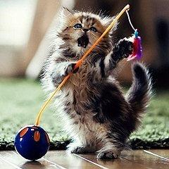 I tako, mic po mic (mac po mac?), Suština pasijansa je postala jedno od 23456213566343 mesta na Internetu gde možete naći fotografije mačića.