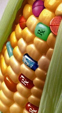 Promet GMO proizvoda može da se reguliše posebnim zakonima, recimo da budu obeleženi barem onako kako su obeleženi proizvodi od duvana. No, to niko ne čuje. Galama do neba, kao da smo guske, a ne ljudi.