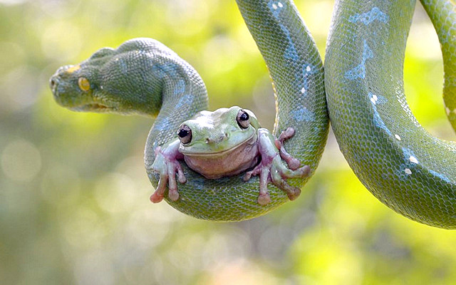 Prava poenta je da ponekad sami prepoznate pravi trenutak da ućutite, umesto da davite posmatrače kao zmija žabu.