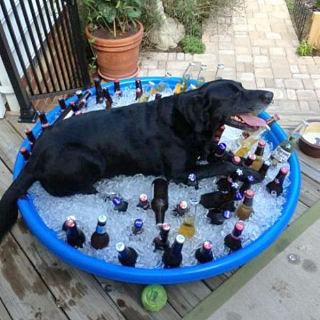 Pasje vrućine