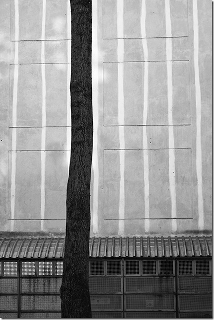 Drvo i zid - Momir Čavić