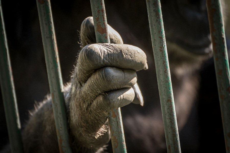 Hoćeš da jedeš, hoćeš da je... da pišeš, a to košta. Ajd u kavez!